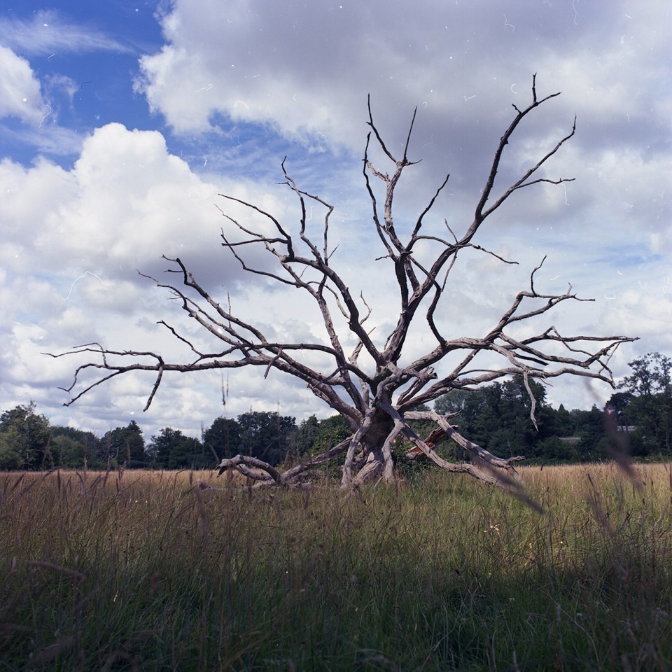 treerooot
