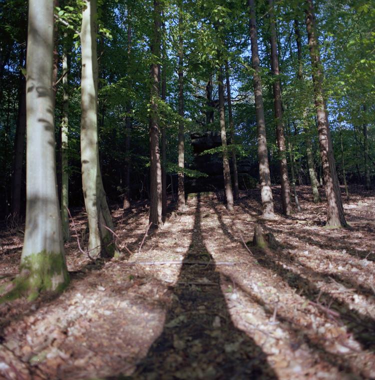 followwoods
