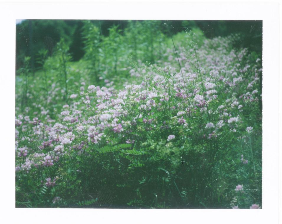 Polaroid_07-14 10