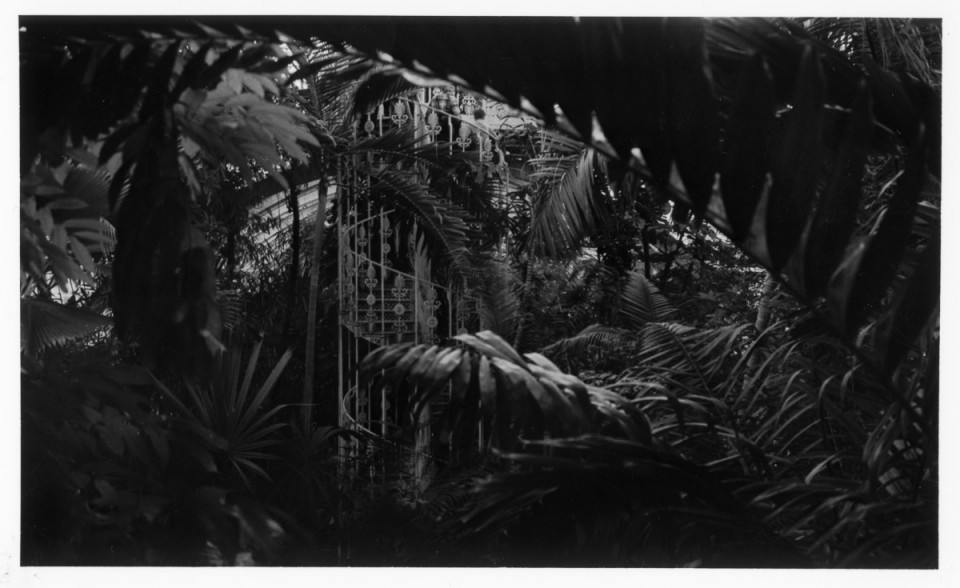Palm-House-photo-film