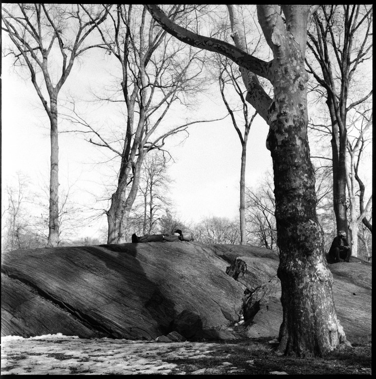 1_sleep_tree_central_park_grainy