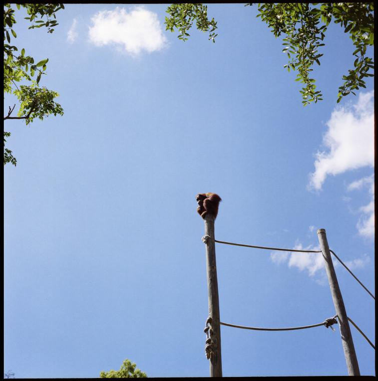1_zoo_monkey
