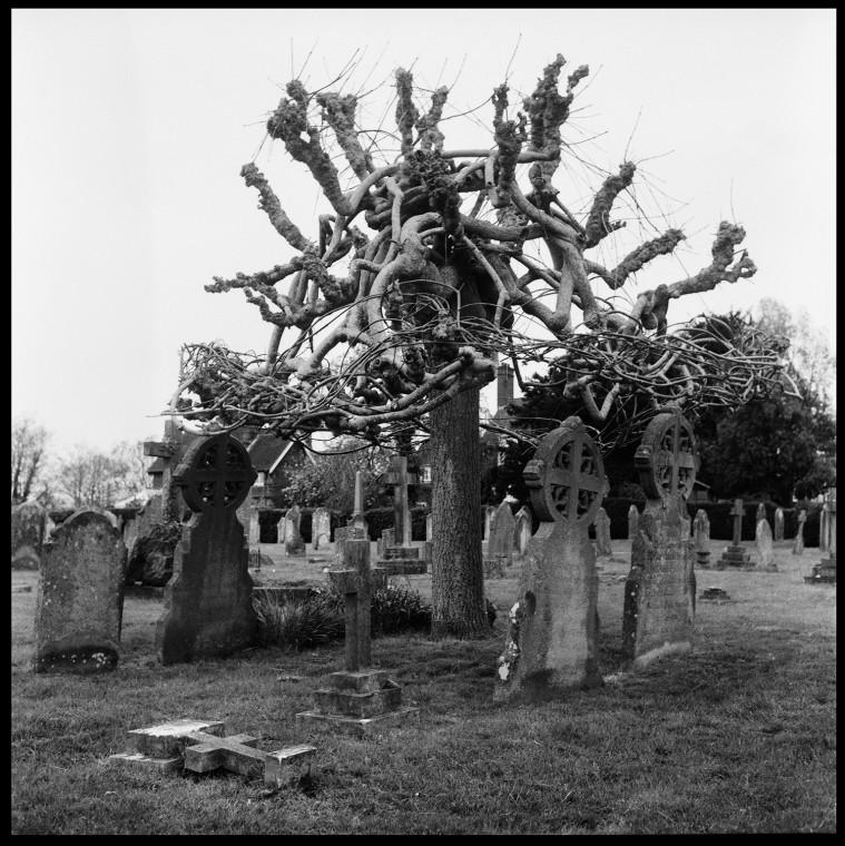 9_tree_cuckfield_cemetary