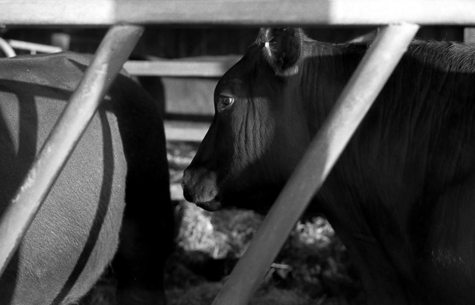 Buckhurst-Farm-photo-film