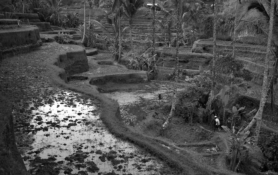 ubud-tegalalang-rice