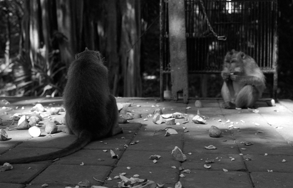 ubud-monkey-leica-ilford-film-photo